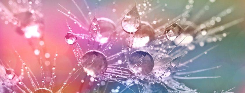 nature's water resistant coating repels water