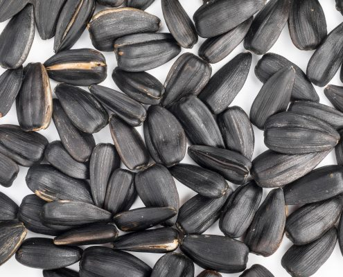 sunflower seeds treated with black seed coating